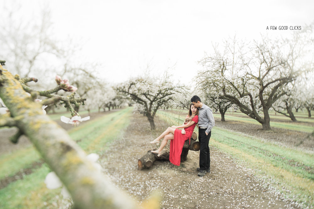 almond-blossom-portrait-photography-using-tilt-shift-by-afewgoodclicks-net-136.jpg