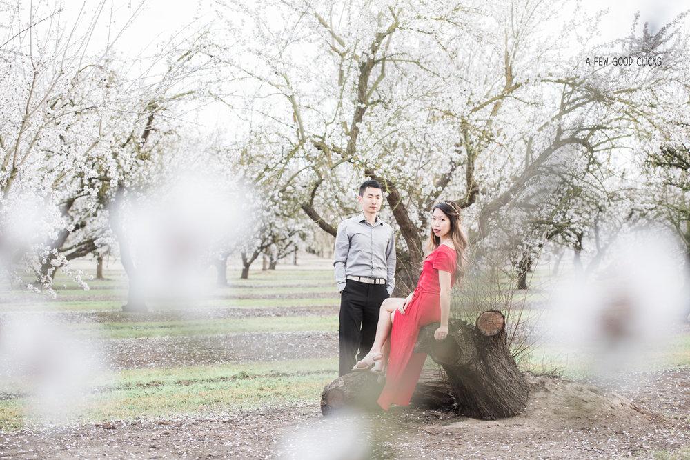 almond-blossom-lifestyle-portrait-photography-by-afewgoodclicks-net-142.jpg