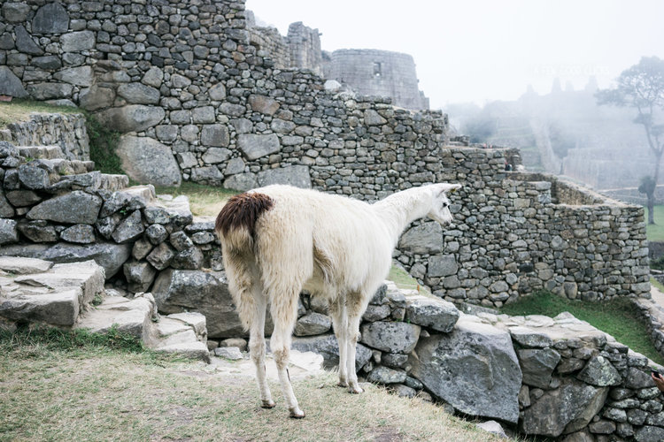 best-of-peru-photographs-things-to-do-12-day-itinerary-a-few-good-clicks-net-190.jpg