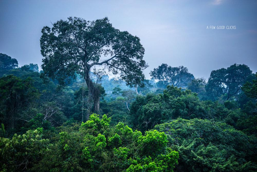 amazon-rainforest-sunrise-photograph-travel-2016-by-afewgoodclicks.net