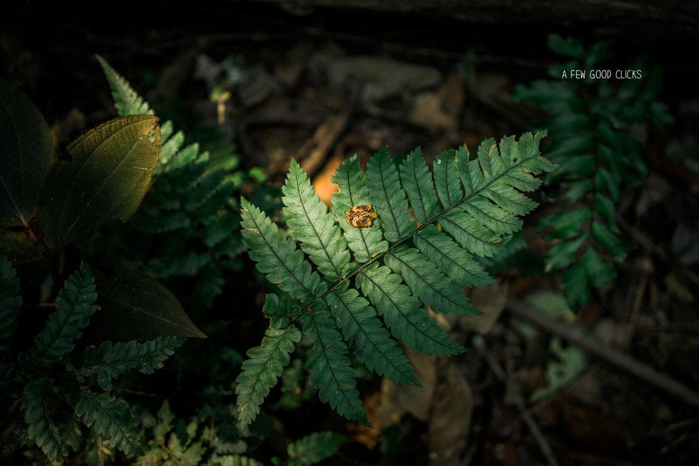 lady-bird-insect-amazon-rainforest-peru-2016
