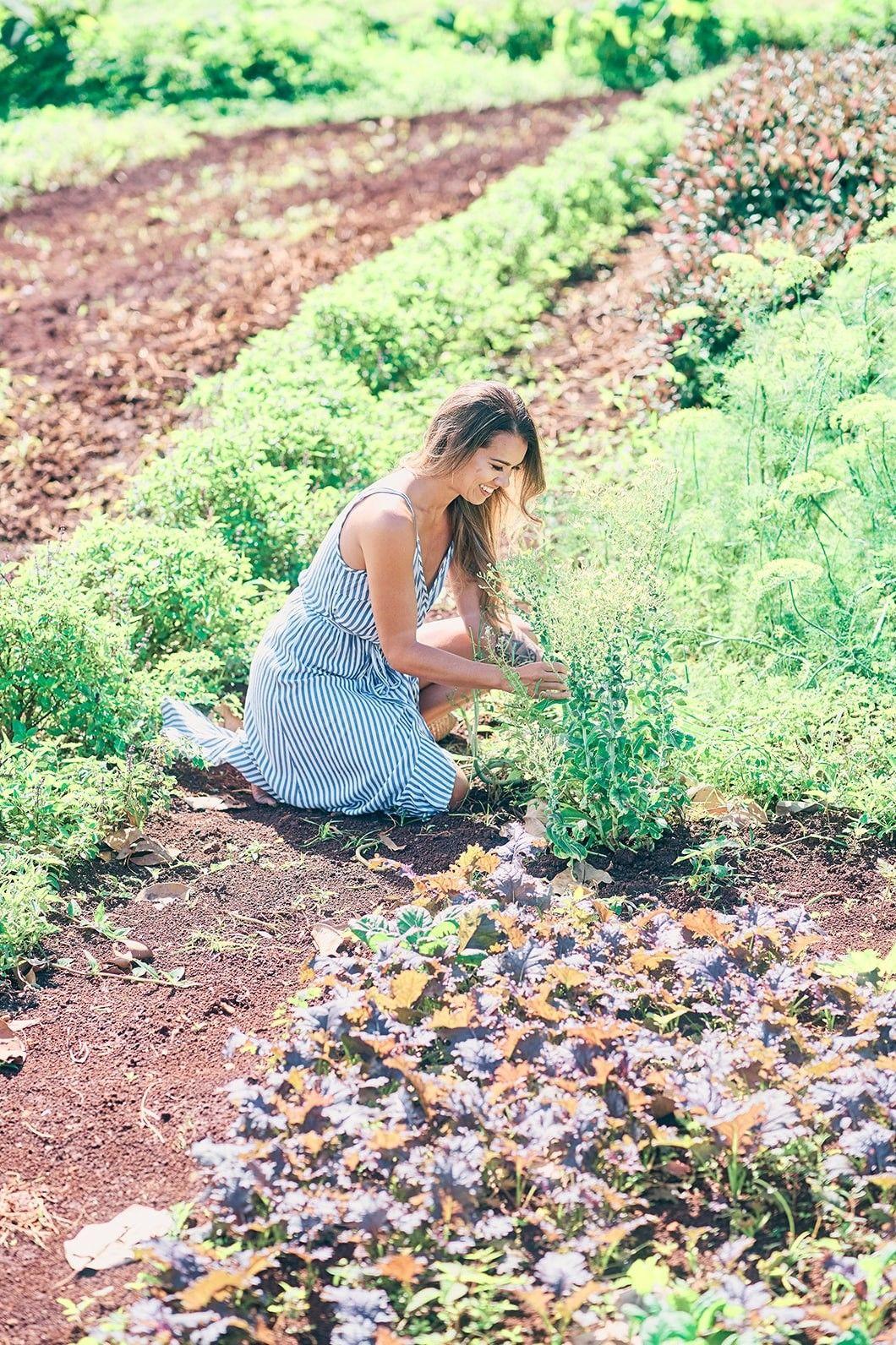 timbers-kauai-farm-photography-afewgoodclicks 23_websize